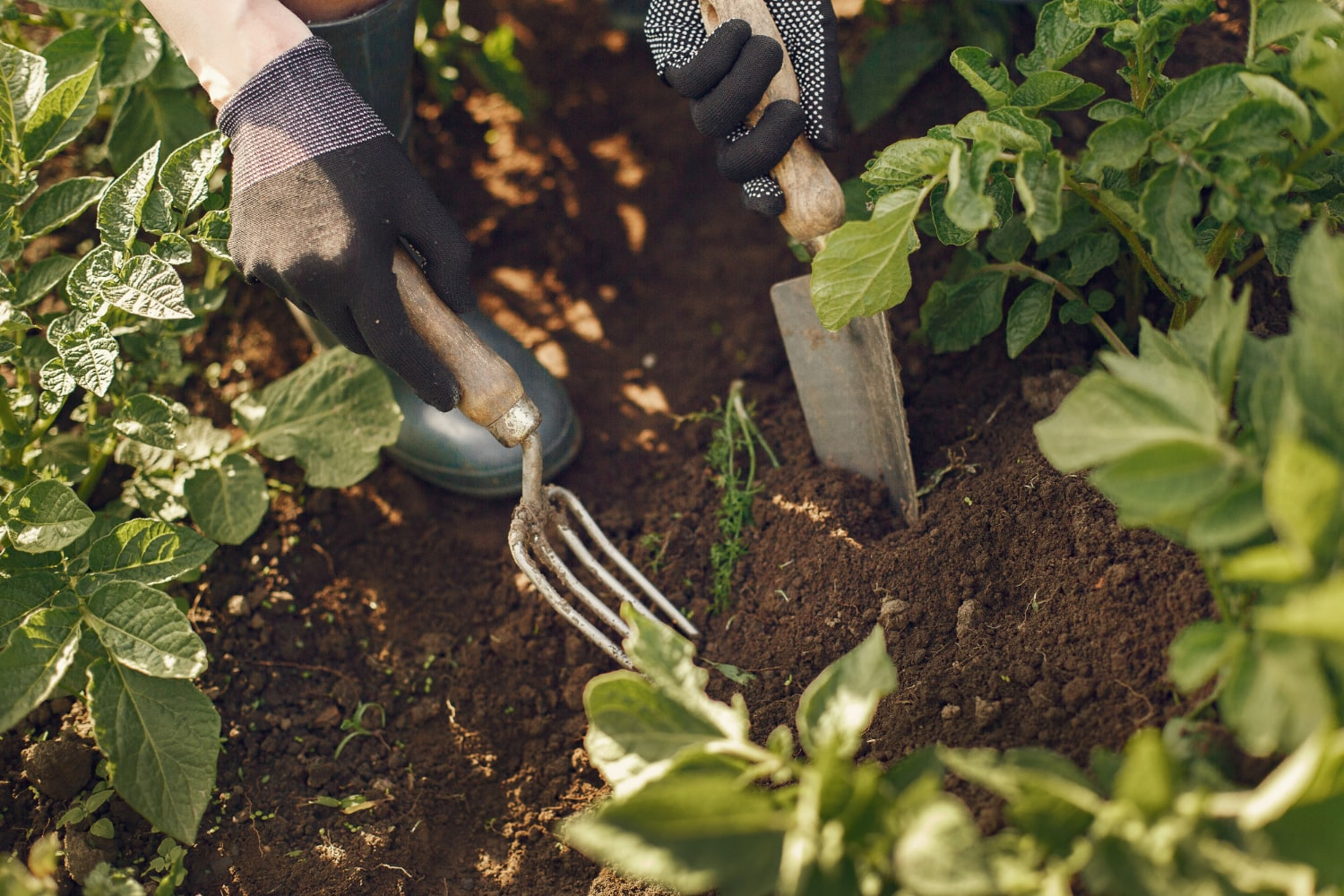 natural pest control for your garden