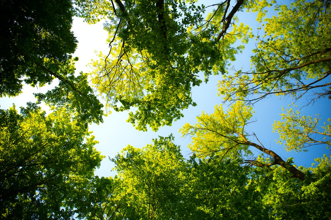 trees and sustainability