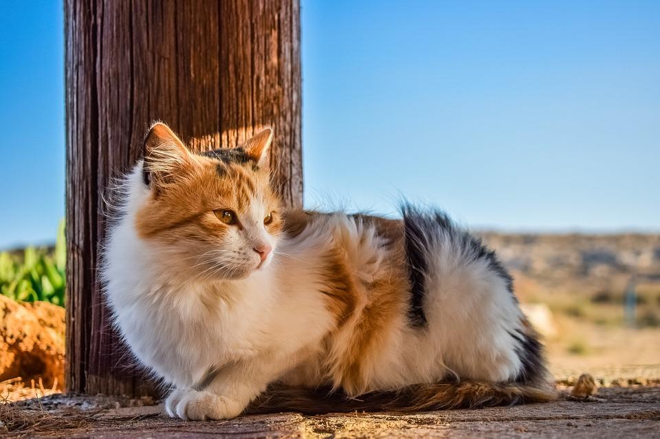 stray cats in Hawaii