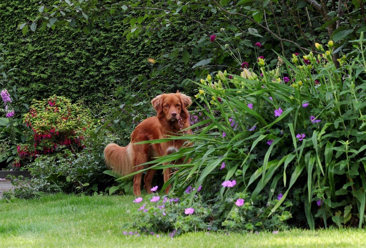 dog-friendly backyard ideas