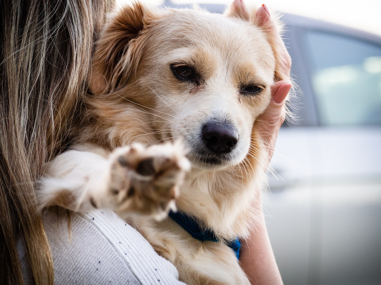 make moving with your pets less stressful